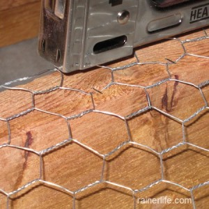 Attaching chicken wire to the bottom of a raised bed.