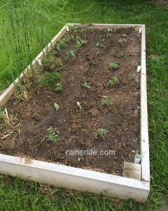 Vegetable Garden in Raised Bed | rainerlife.com
