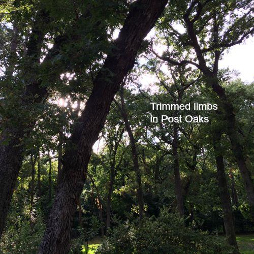 Our yard - tree work | rainerlife.com