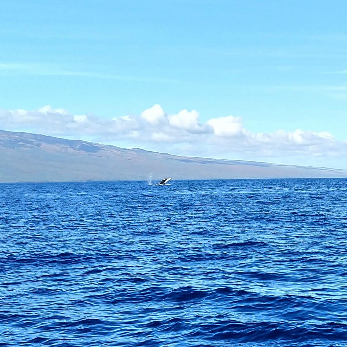 Whale watching {Maui} | rainerlife.com