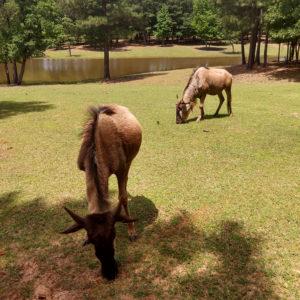 Cherokee Trace Drive-Thru Safari | rainerlife.com